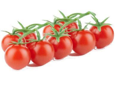 ristra de tomates cherry en la misma rama