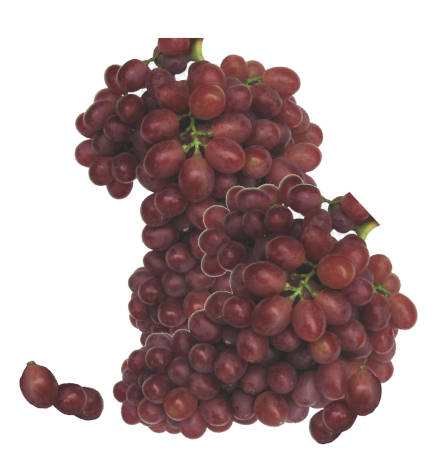 racimos de uva fresa y unas uvas fresas sueltas