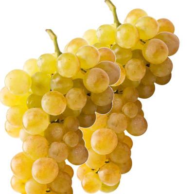2 racimos de uva moscatel