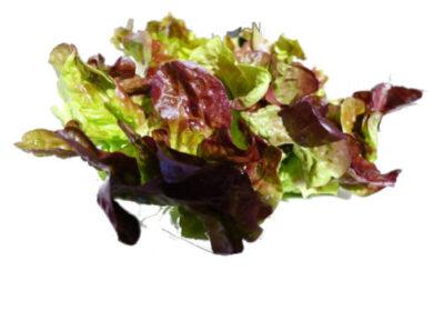 lechuga hoja roble en hojas